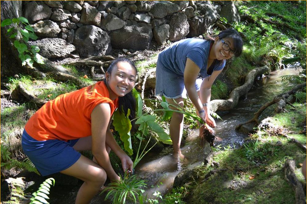 Leo club members, Jordan Higuchi and Jessica Manuel, help clean the lo'i at the University of Hawaii. Students weeded, fertilized and reinforced taro plants.