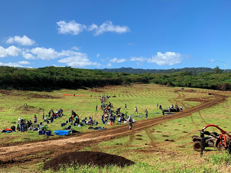 Sacred Hearts Academy students and teachers helped plant 10,000 trees at Gunstock Ranch in Kahuku. The initiative is part of the Carbon Neutrality Challenge, which aims to make Hawaii the first carbon-neutral state. Photo courtesy of Camilo Mora.